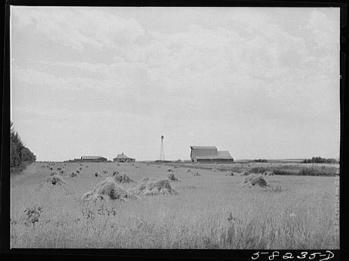 """7. """"Wheat fields on farm north of Williston, near Grenora, North Dakota"""""""
