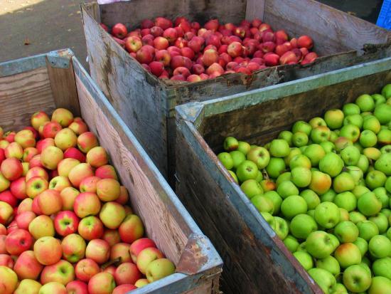 3. Camino: Berry Picking