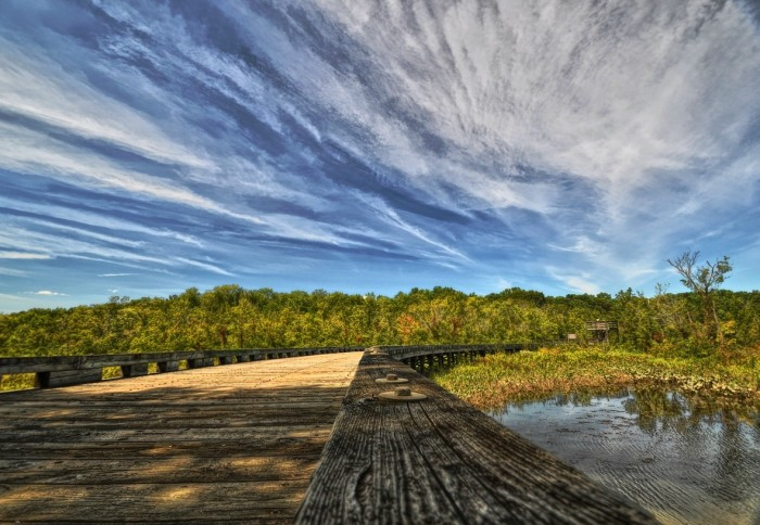 Visit Jug Bay at least once for its exuberant beauty and to become educated about this Maryland gem.