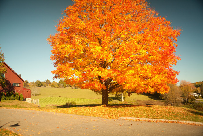 12. Gibbet Hill in Groton is a great place to grab a few striking fall foliage shots.