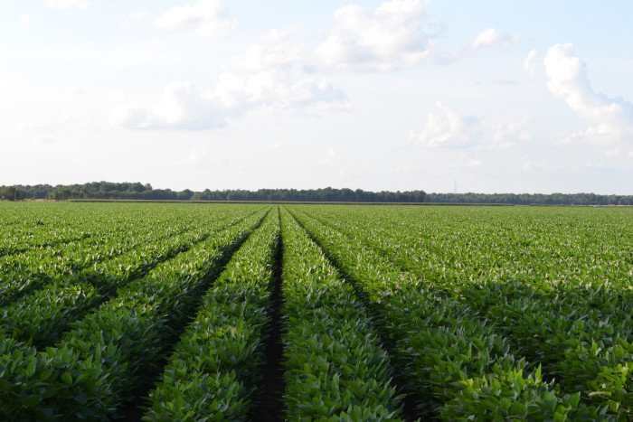 8. ...and soybeans