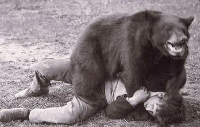 6. In Alabama, it's considered a felony to participate in bear wrestling.