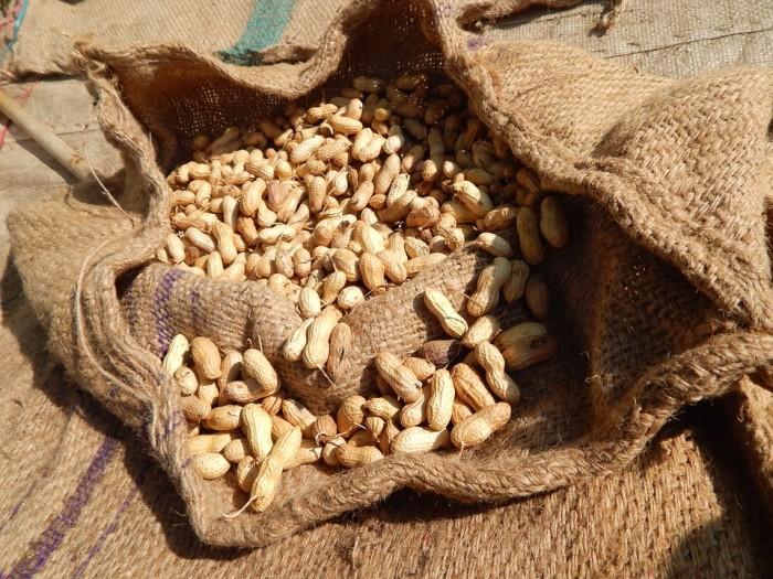 10. Growing peanuts.