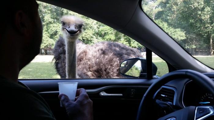 11. Visit Harmony Park Safari.