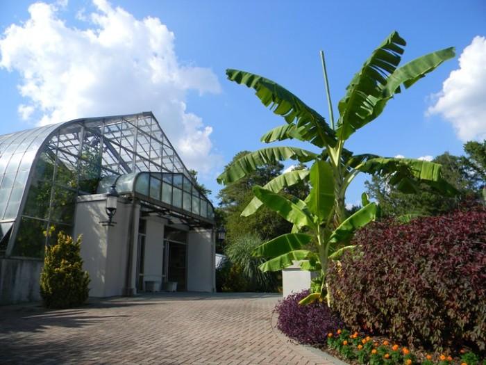 6. Walk the grounds of the beautiful Birmingham Botanical Gardens.