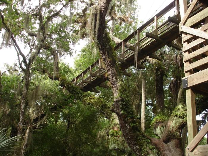 Canopy Walkway Suspension Bridge Myakka River SP