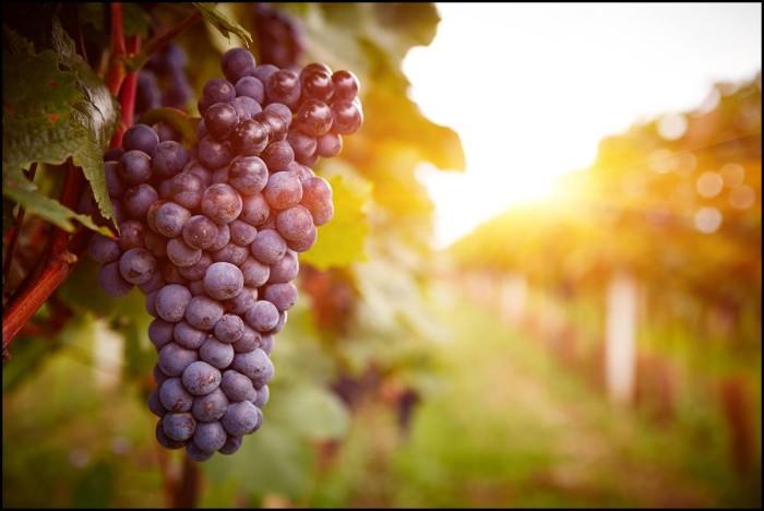 Coeur d'Alene Winery