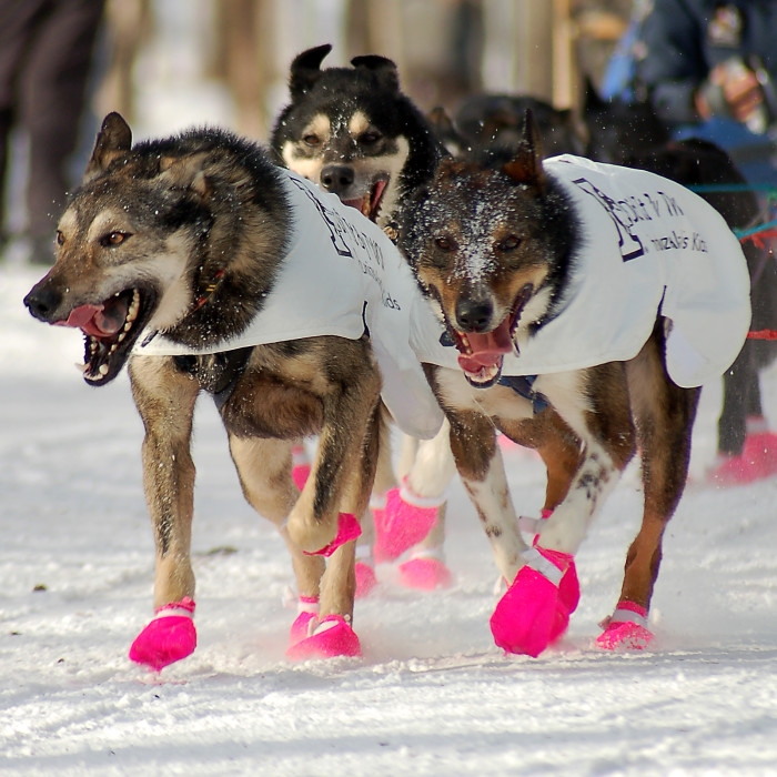 20. Your sled dogs have more pairs of shoes that you do.