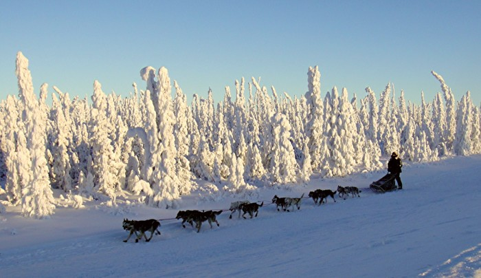 16. Seeing a sled dog team on the side of the road is no longer something you write home about.