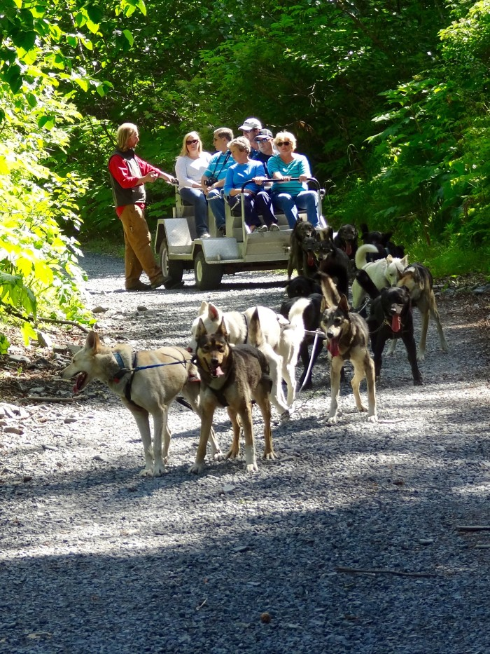 17. Dog Mushing On Gravel: With six grown adults leading the way.