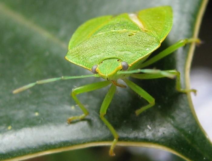 10 Creepy Washington State Bugs