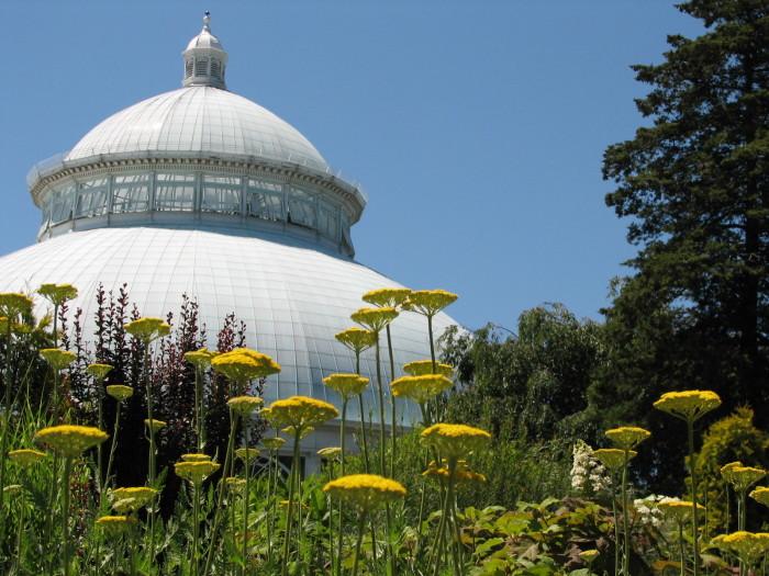 6. New York Botanical Garden, Bronx