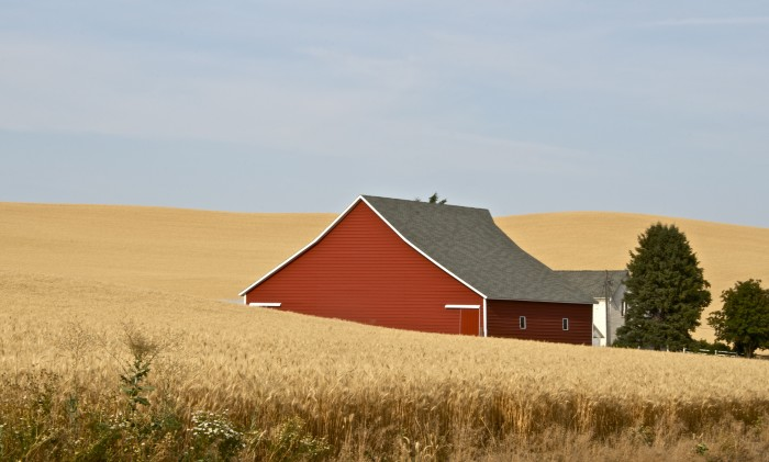 1.  A wheat field in the Palouse.