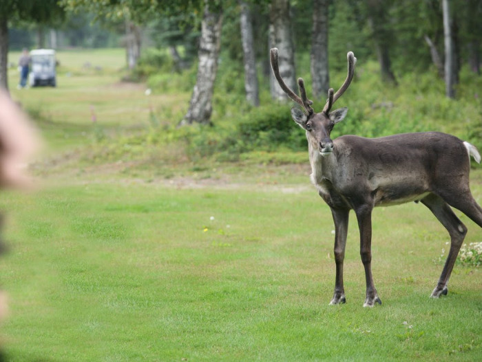6. Golf with the locals.