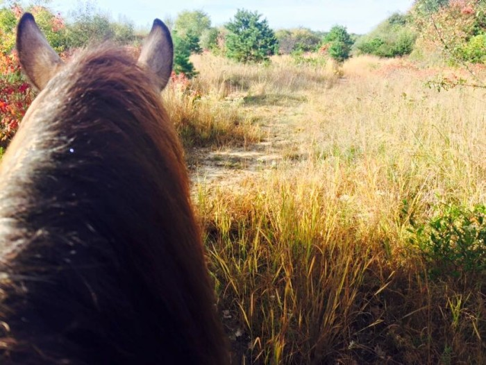 13. Legacy Riding Stables, Sayreville