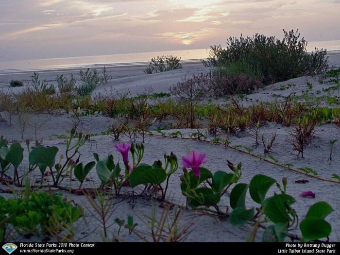 Little-Talbot-Island_contest_Brittany-Dugger_Dune-Sunrise
