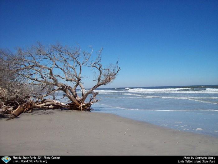 Little-Talbot-Island_contest_STEPHANIE-BERRY_My-blue-heaven