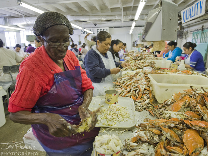 Nicey Jones of Cambridge, Maryland picked crabs for 66 years before retiring in 2014 from the J.M Clayton Seafood Company. Nicey's mother also picked crabs at J.M. Clayton in Cambridge. For many working in the Maryland's seafood industry, the knowledge and tradition is passed on from generation to generation.