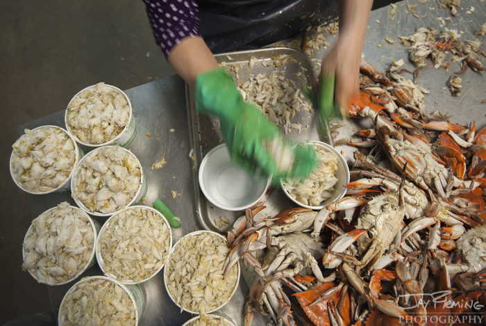 Blue Crabs have three grades of meat in their bodies: Claw, Lump and Jumbo Lump. When pickers are extracting the meat (a process that has been the same way for over 100 years), they package the meat into separate containers for customers. Claw meat is the least expensive grade of meat, lump is slightly more expensive, and jumbo lump is the highest quality and most expensive meat from the crab body. Chefs and seafood enthusiasts use the different grades of meat for dishes like crab cakes, crab soup, or crab dip.