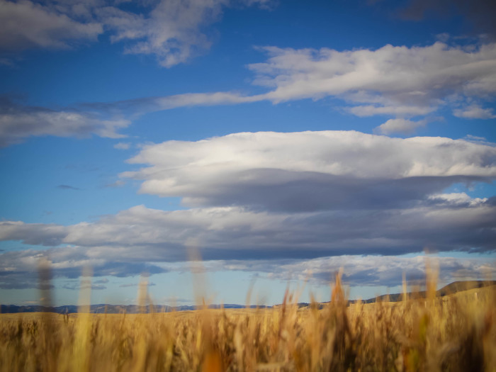 2. October grass in rural Montana near Butte.