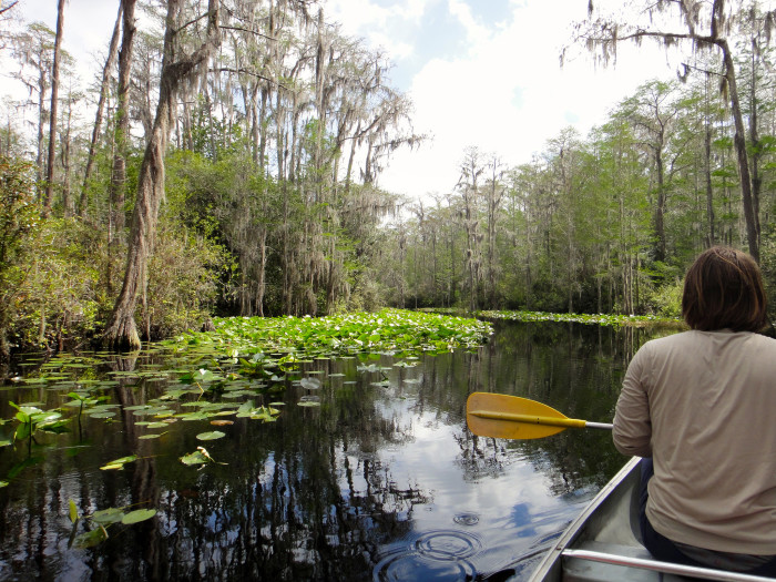 15. Okefenokee Swamp Park, Georgia. Time for something different in the form of a 438,000-acre, peat-filled wetland. Grab a canoe.