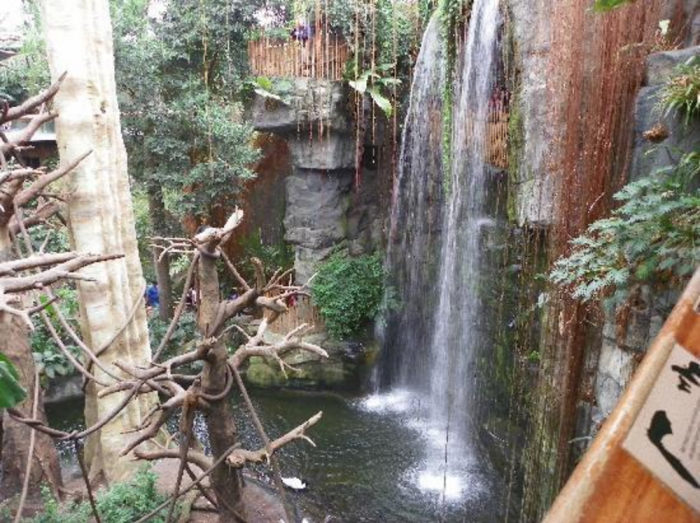13. In 1992, the Lied Jungle was named as one of the eight top engineering achievements in the U.S.