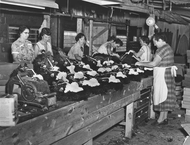 12. Delaware was known as a holly tree haven; shown here are ladies making holly wreaths for the holidays.