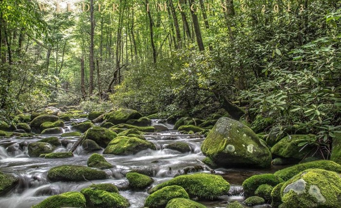 1) Take a hike in the Great Smoky Mountains.