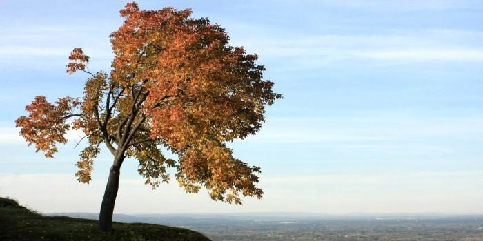 9. John Boyd Thacher State Park, Voorheesville