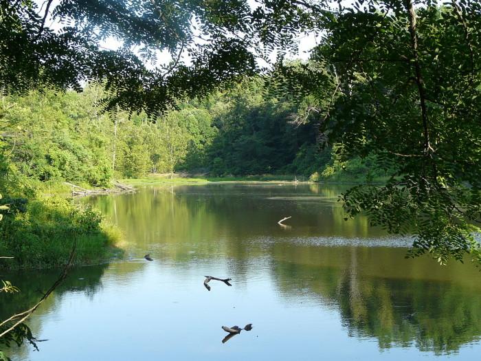 Trails of John James Audubon State Park.