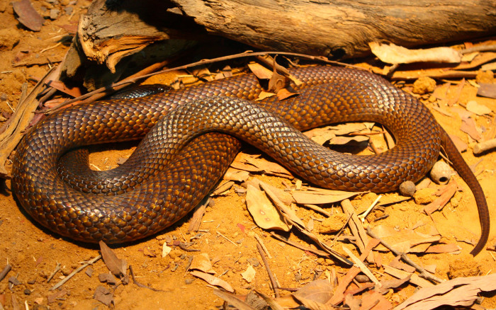 10. If you get a snake bite, chase it into a body of water and dip your wound in and the snake will die. Then get some medical help ☺.
