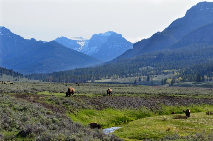 12. Lamar Valley, Yellowstone National Park