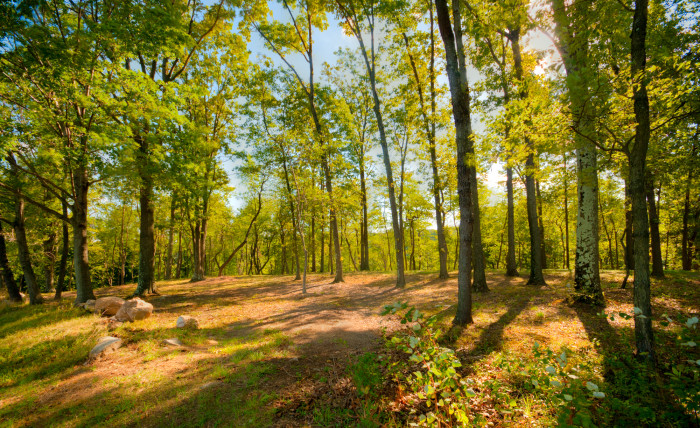 9. With so many gorgeous trails to explore, you'll never be far from the perfect place to enjoy some fresh air and clear your head.