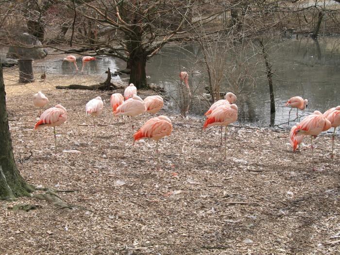 14. Visit a zoo.
