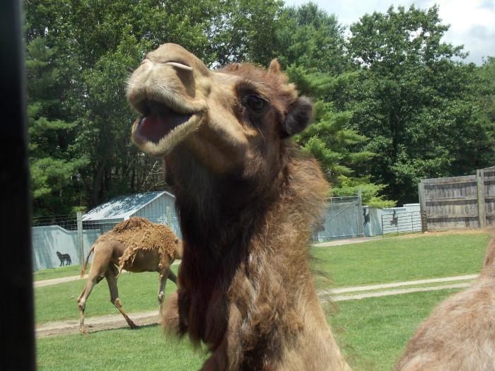 3. Adirondack Animal Land