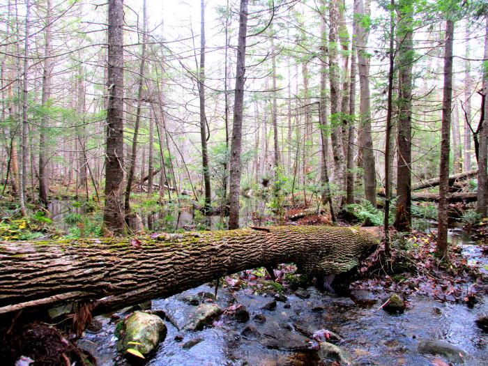 1. The Bear Brook Remains
