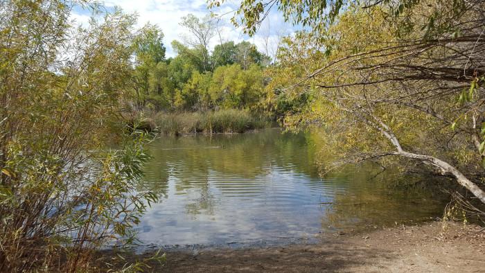4. Beus Pond, Ogden