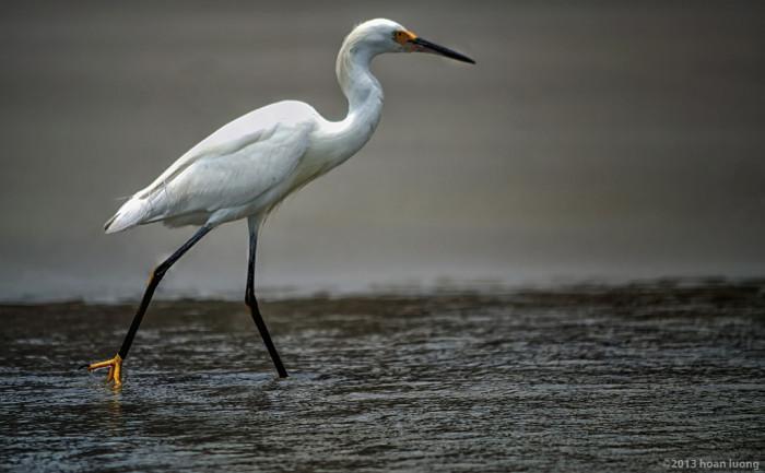 11. Birding