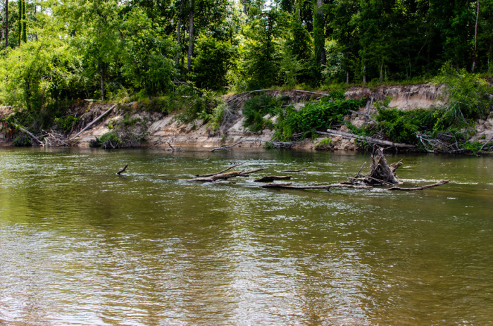 6) Bogue Chitto State Park