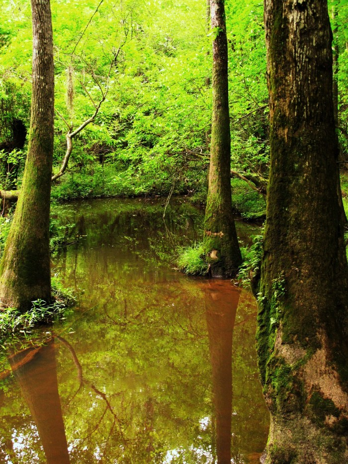 9. Bogue Chitto State Park