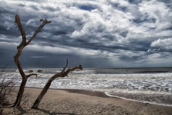 6. Edisto Island - Botany Bay