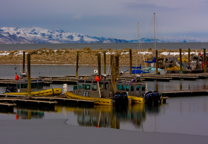 Check out the brine shrimp boats at the dock.