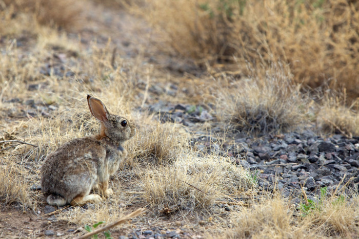 3. When driving, you're skilled at dodging tumbleweeds, coyotes, and suicidal bunnies...