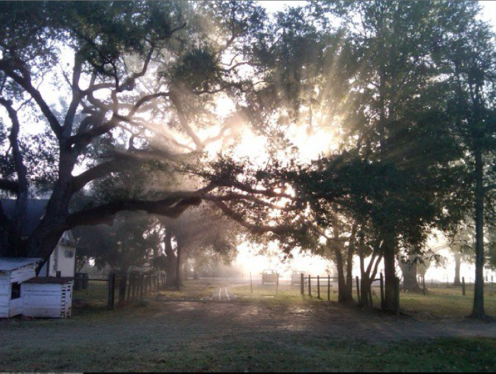 10. Cane River Creole National Park, Natchitoches