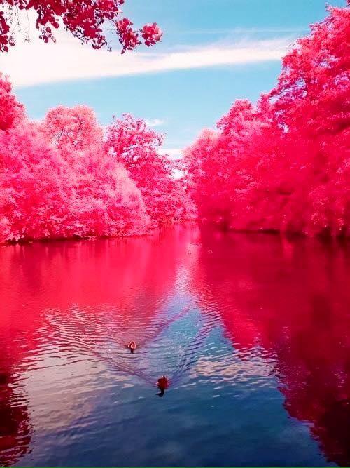 3. Cherry River