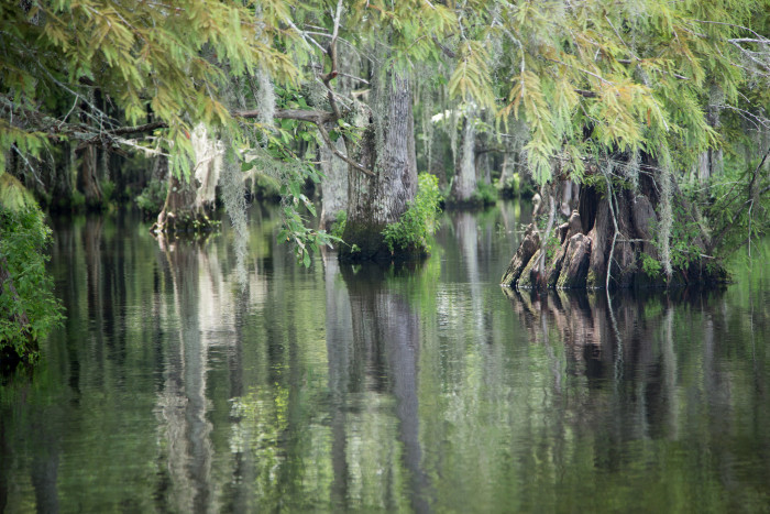 7) Chicot State Park
