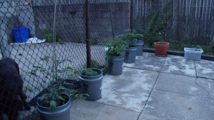 8. It is illegal to plant a garden in any public street.