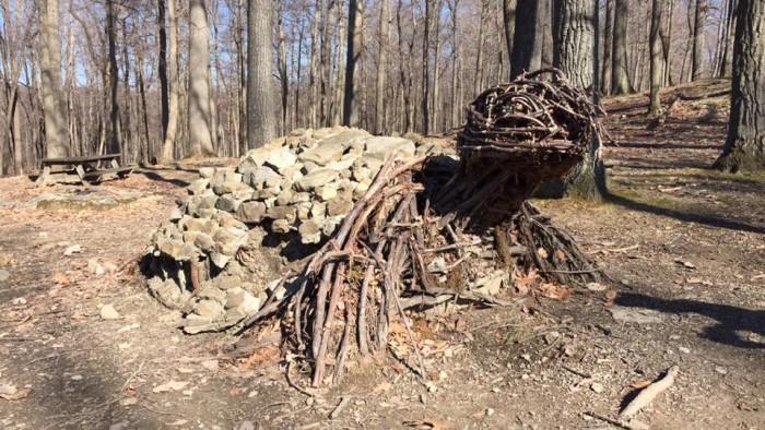 cooper's Rock turtle