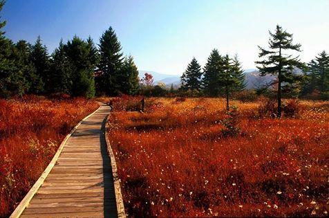3. Visit the unforgettable Cranberry Glades.