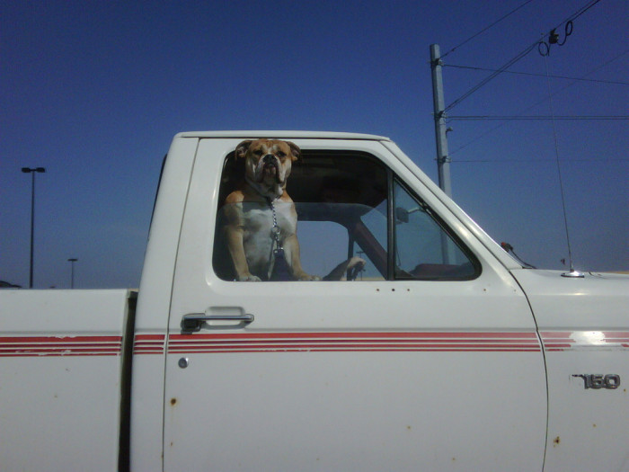 1. No matter where they're headed, they'll always let their best friend ride shotgun.